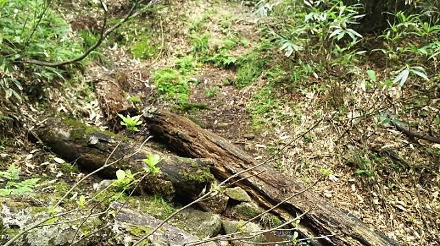 170720 若杉天然林⑮ ブログ用