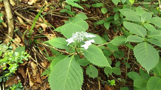 170726 岡山県立森林公園⑨ ブログ用