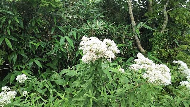 170726 岡山県立森林公園⑯ ブログ用