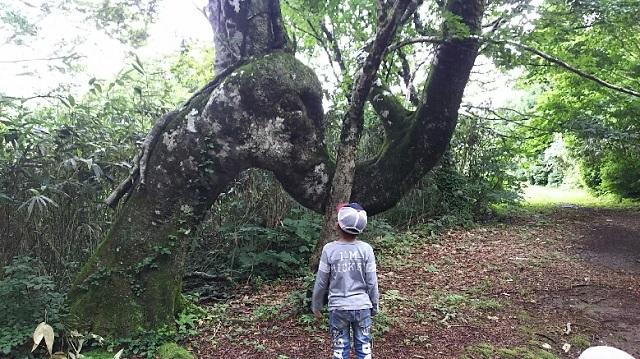 170726 岡山県立森林公園 yamap⑩ ブログ用