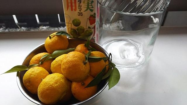 171106 柚子① ブログ用
