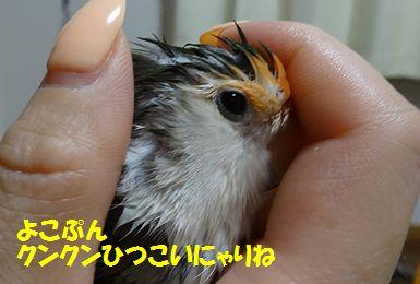 濡れハリネズミ4