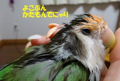 濡れハリネズミ5