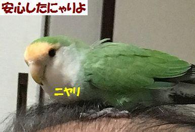 2017夏休み4