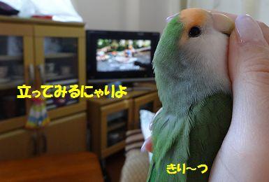 映画鑑賞5