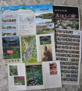 紫陽花と花菖蒲-39