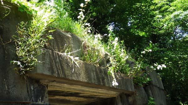斜めから見た石室のほたるぶくろ