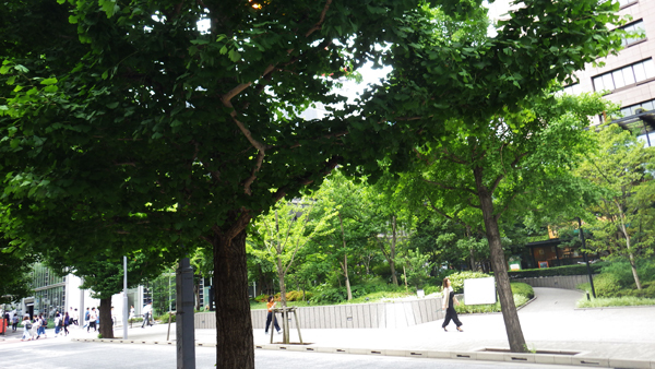 街路樹との一帯