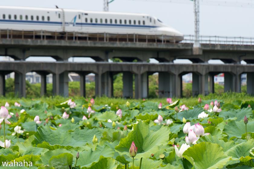 290711kanagasaki-2.jpg