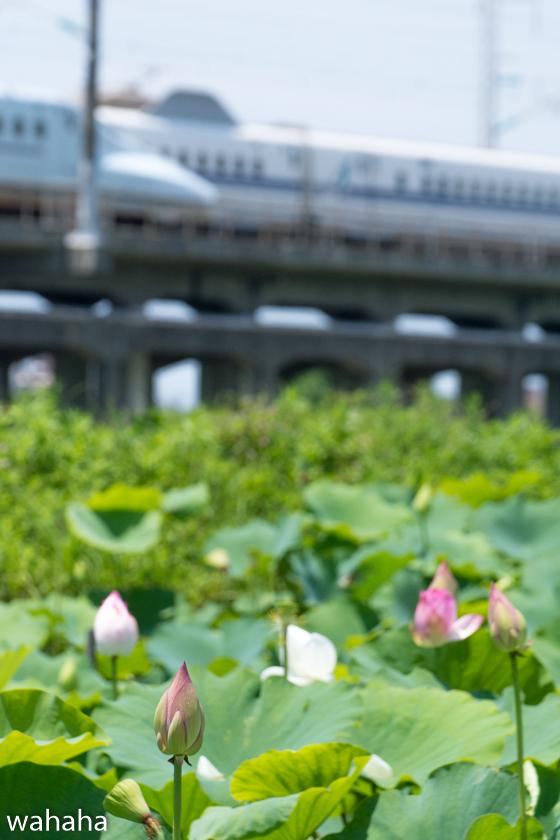 290711kanagasaki-3.jpg
