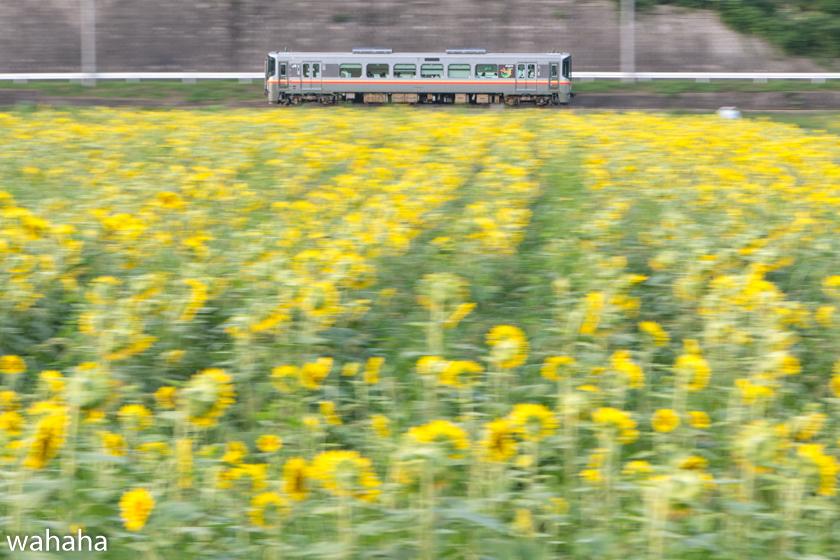 290714kisinsen_himawari-2b.jpg