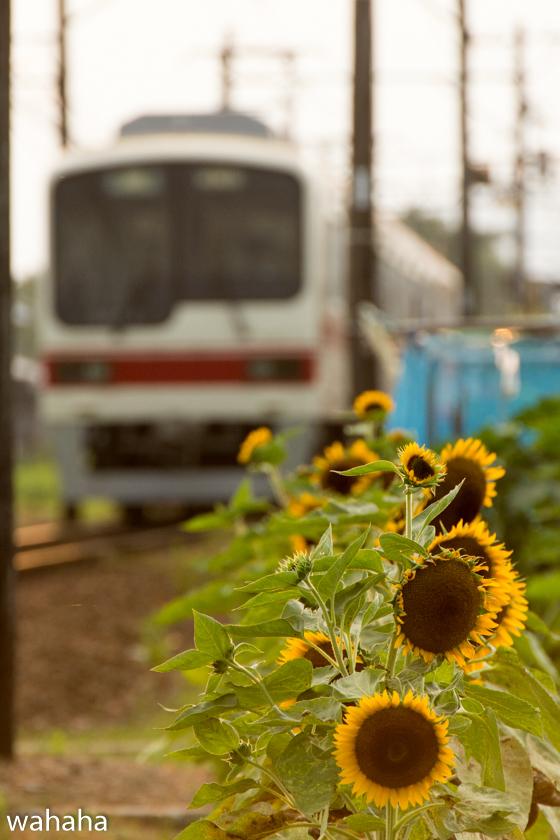 290730sintetsu_hata-2.jpg