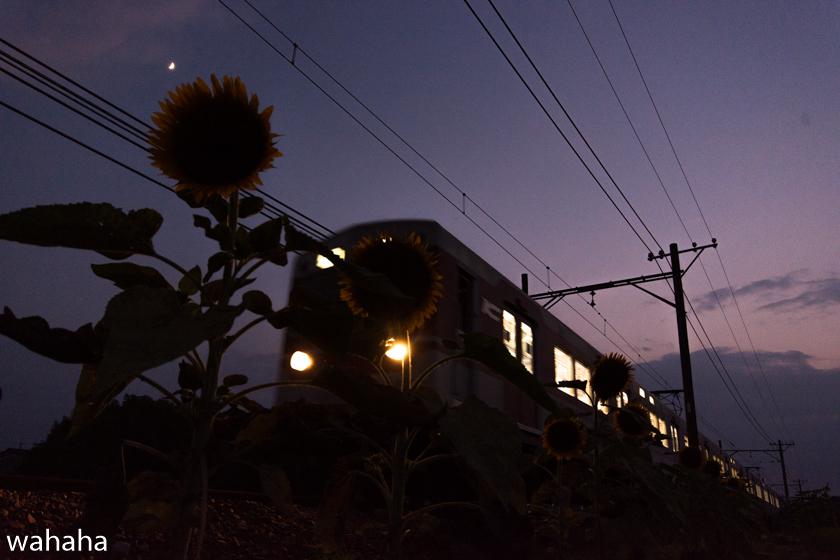 290730sintetsu_hata-5.jpg