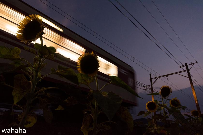 290730sintetsu_hata-6.jpg