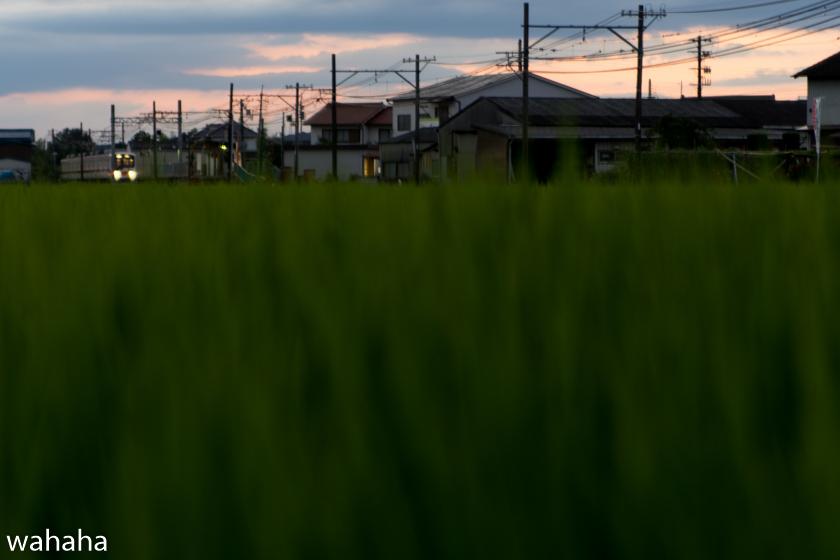 290803sintetsu_hata-3.jpg