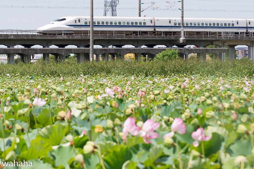 290814kanagasaki-1b.jpg