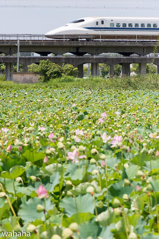 290814kanagasaki-2b.jpg