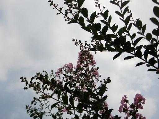 2017-07-30 sarusuberi