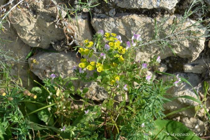 黄と紫の花
