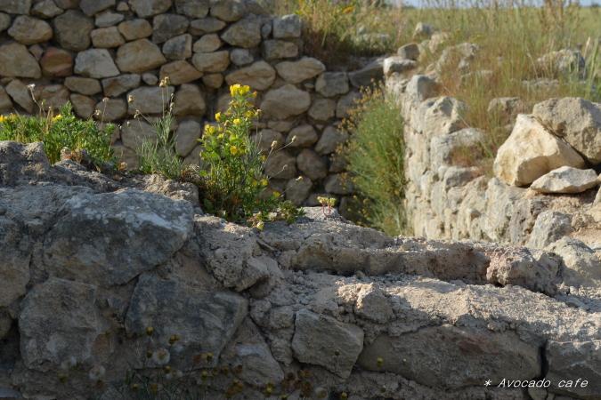 石の上の花