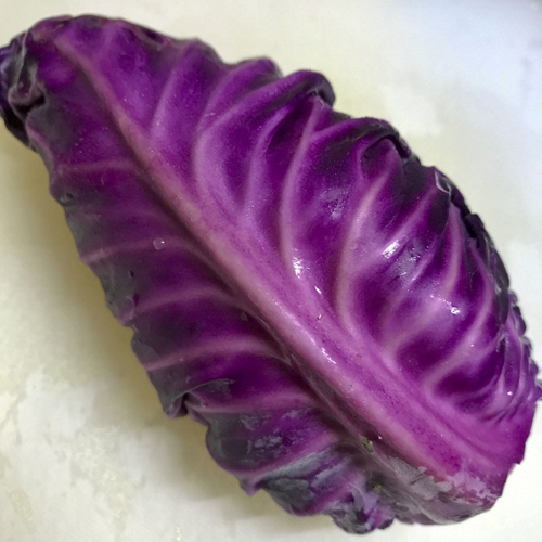 purple_cabbage_17_7_12_3.jpg