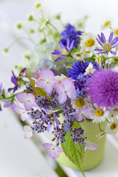 various_flowers_17_6_13_1.jpg