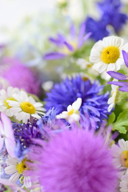 various_flowers_17_6_13_2.jpg