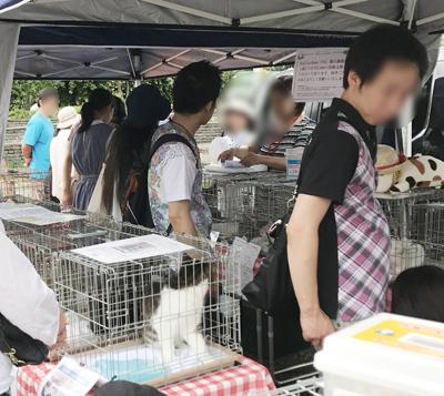 8月20日新都心東広場譲渡会の様子