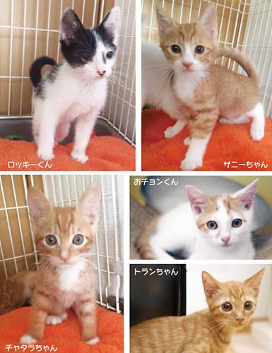 3ヶ月位の可愛い仔猫達が参加します。
