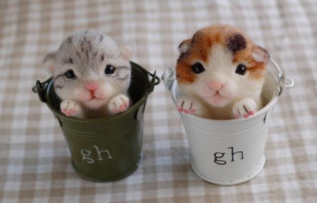 2017猫のお店かくれんぼ