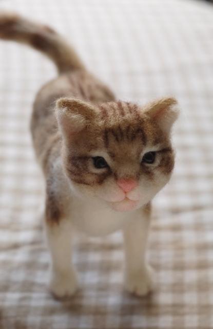 2017猫のお店キジ猫