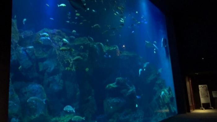 男鹿水族館とゴジラ岩 (3)