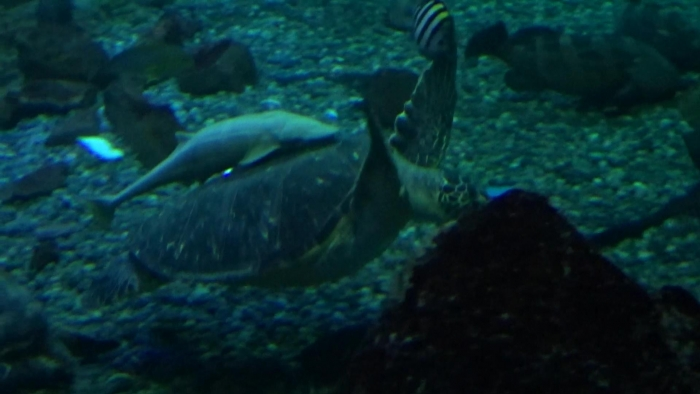 男鹿水族館とゴジラ岩 (4)