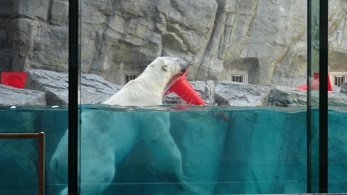 男鹿水族館とゴジラ岩 (9)