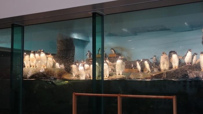 男鹿水族館とゴジラ岩 (10)