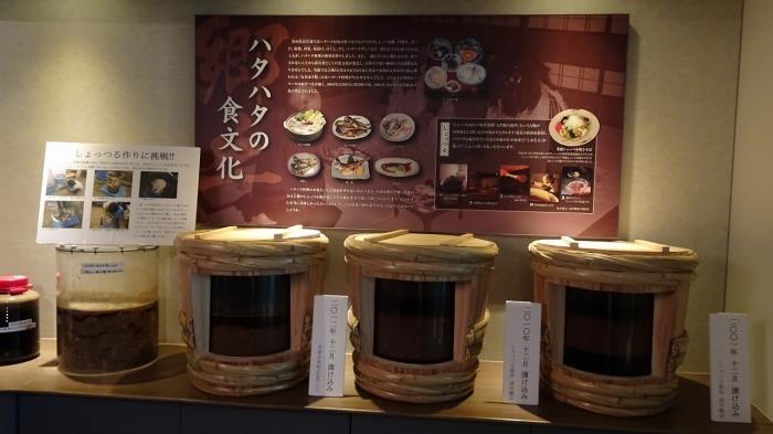 男鹿水族館とゴジラ岩 (11)
