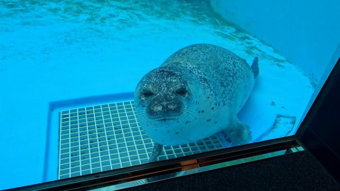 男鹿水族館とゴジラ岩 (15)
