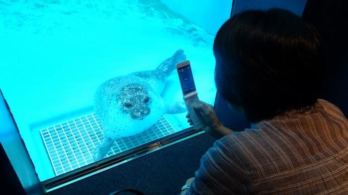 男鹿水族館とゴジラ岩 (17)