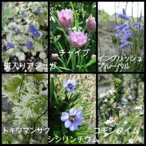 PhotoGrid_1494209067876.jpg