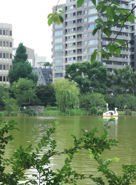 Swan_01.jpg