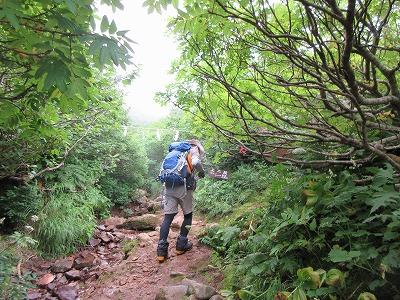斜里岳8月旧道上二股