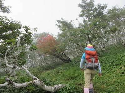 西別岳登山道1