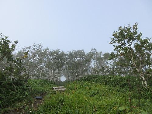 西別岳登山道3