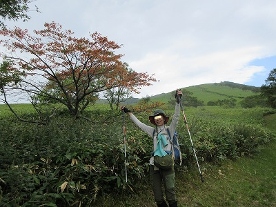 西別岳ガマン坂エゾヤマザクラ(9月)