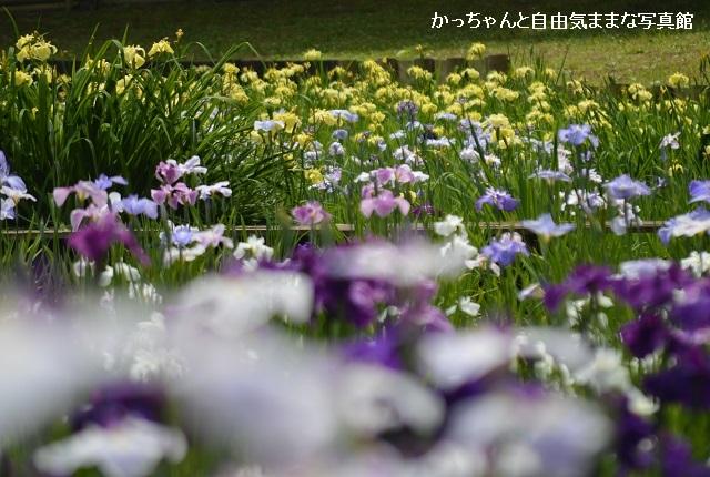 DSC_5256.jpg