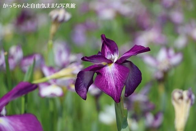 IMG_2983_koiwa.jpg