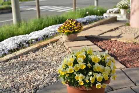 ブログ春の花3