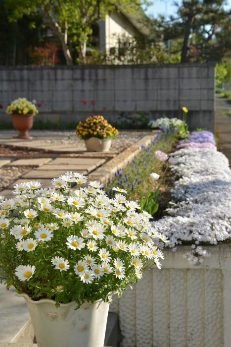 ブログ春の花5