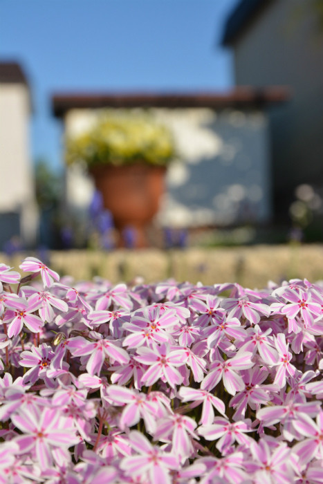 ブログ春の花8