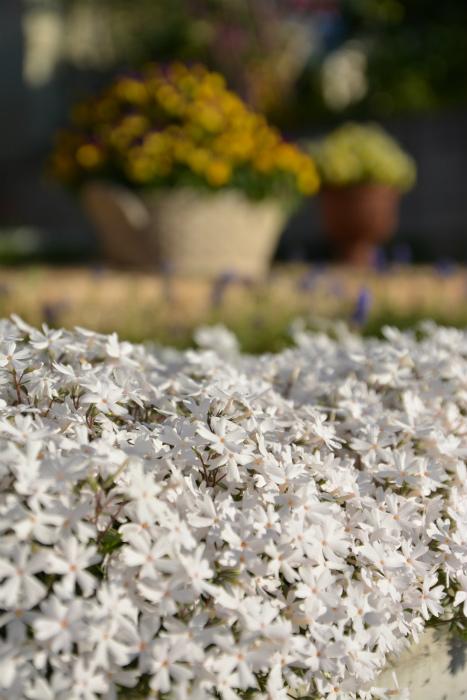ブログ春の花7